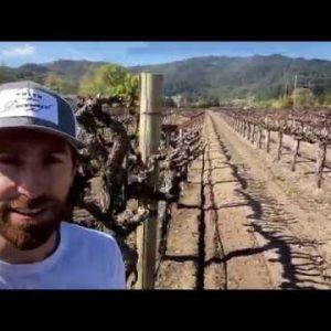 Ian Devereux of Smith Devereux Wines   Bud Break in a Saint Helena vineyard