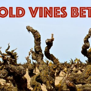 "Do ""Old Vines"" Produce Better Wine?"