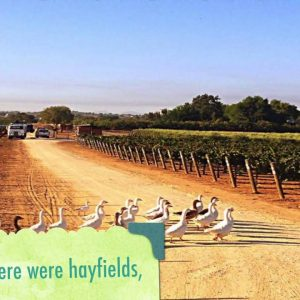 The California Wine Club presents La Vigne Winery
