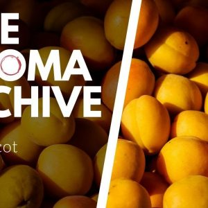 The Smell of APRICOT in Wine - The Aroma Archive Ep22 - Apricot