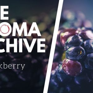 The Smell of BLACKBERRY in Wine - The Aroma Archive Ep6 - Blackberry
