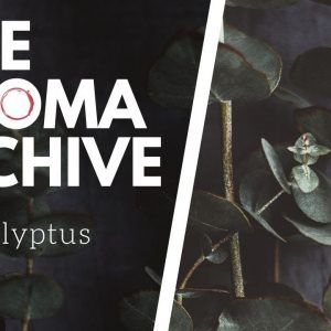 The Smell of EUCALYPTUS in Wine - The Aroma Archive Ep9 - Eucalyptus