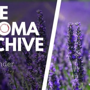 The Smell of LAVENDER in Wine - The Aroma Archive Ep28 - Lavender
