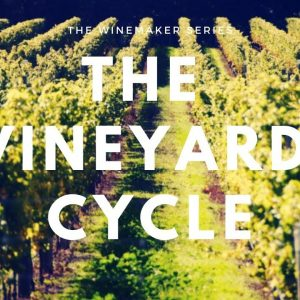 The Vineyard Cycle - 12 Months in the Life of a Vine