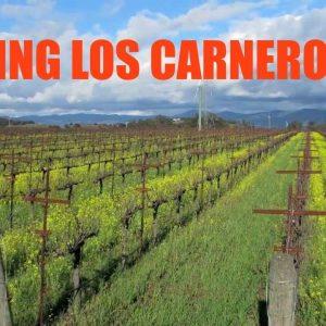 Visiting Los Carneros AVA