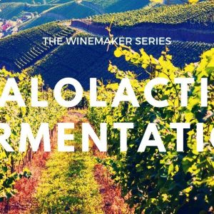 What is MALOLACTIC FERMENTATION - How does it affect your wine?