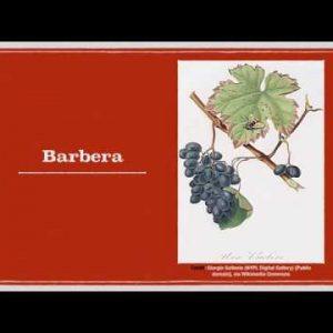 Winecast: Barbera
