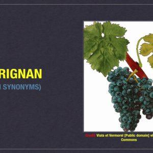 Winecast: Carignan