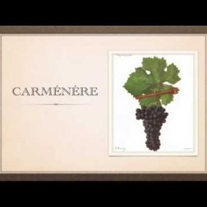 Winecast: Carménère