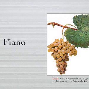 Winecast: Fiano