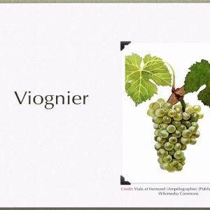 Winecast: Viognier