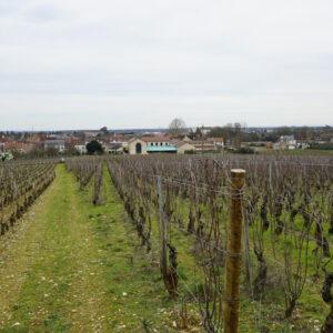 arnoux-lachaux-viticulture-–-proces-1