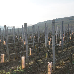 burgundy-viticulture-101:-1
