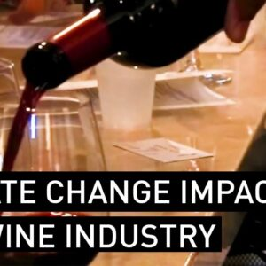 Climate Change Is Impacting the Wine Industry, Part 1 | NBCLA