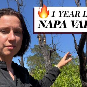 Napa Valley Fires in 2021 | Wine Folly